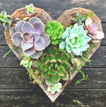 Succulent Frame Kits make for the perfect gift or DIY project. Planted Places will send you everything you need to build your own personalized Framed Planter. Succulent Frame Kits and Planters make for the perfect decorations for indoor and outdoor living spaces. Make plants a part of your art collection and decorate your walls with the Succulent Wreath Frame Kit or let them shine as indoor or outdoor table centerpieces.
