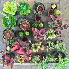 Our Succulent Living Wall Products will transform your blank walls and empty corners. Decorate your patio, deck, fence or backyard with plants and bring your outdoor living spaces back to life. Or if you're in need for some apartment therapy bring your vertical garden indoors and elevate your interior design game with the modern aesthetic of a beautiful living wall. We will send you everything you need to grow all different types of succulents from the most unique to the most trendy! So get your DIY project face on and tap into your inner gardener. Gardening has never been so fun and easy!