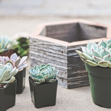 Looking for the perfect gift this holiday season? Shop the Planted Places' 2018 Holiday Gift Collection for Succulent Lovers. Included are our products that are perfect for gift giving.