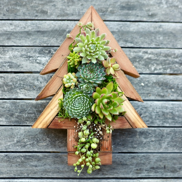 Succulent Tree Frame